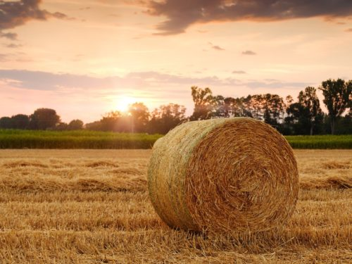 TRANSLATION IN THE AGRICULTURAL INDUSTRY